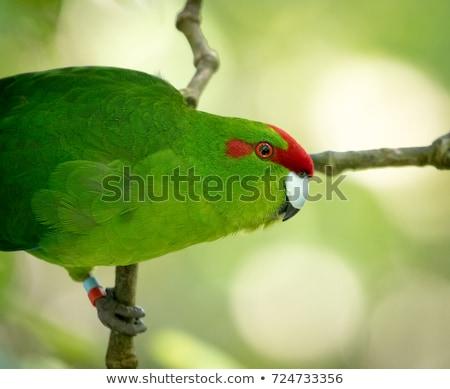 красный · птица · белый · Cute · молодые · ярко - Сток-фото © CatchyImages