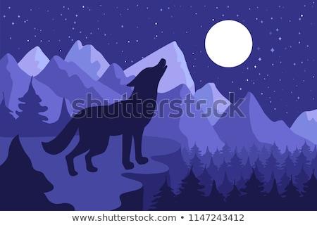 Wild Wolf Howling On The Hillside Stock photo © barsrsind