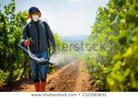 Spraying the vineyard Stock photo © Hofmeester