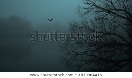 river mist stock photo © zittto