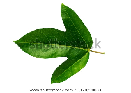 Green leaf passion fruit Stock photo © homydesign