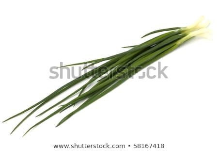 spring onion isolated on white backgroun close up stock photo © natika