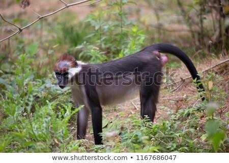 Cara amor natureza cabelo África animal Foto stock © digoarpi
