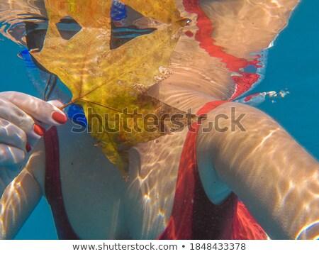 Closeup portrait of a woman`s body part in swimsuit Stock photo © deandrobot
