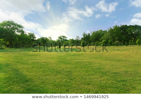 Fields with bushes Stock photo © cherezoff