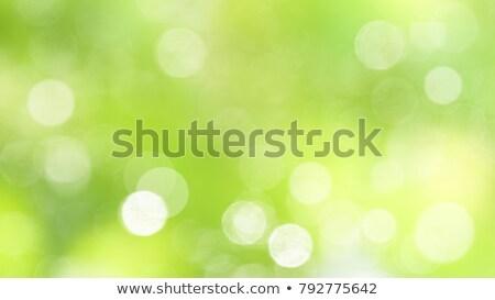 transparente · gota · de · água · luz · cinza · texto · padrão - foto stock © krisdog