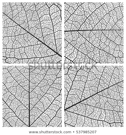 Structure of a leaf Stock photo © bluering
