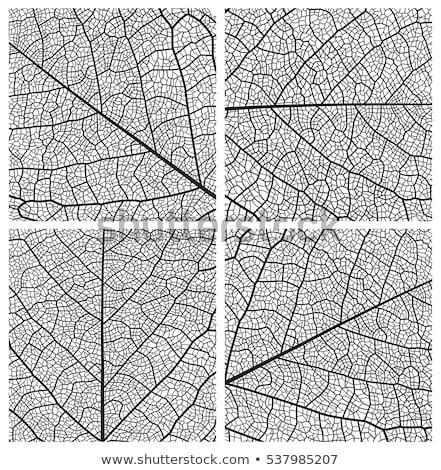 Struktury liści ilustracja anatomii edukacji zielone Zdjęcia stock © bluering