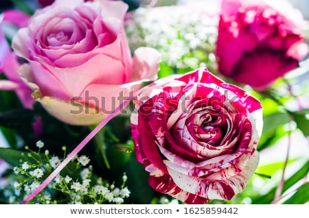 Frische  bunte Rosen Stock photo © BarbaraNeveu