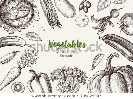 fruit & vegetables sketch Stock photo © get4net
