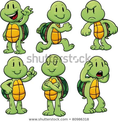 Cartoon счастливым черепахи указывая иллюстрация оболочки Сток-фото © bennerdesign