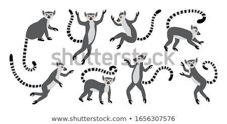 Happy Cartoon Lemur Stock photo © cthoman
