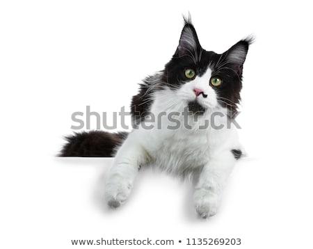ゴージャス 黒白 メイン州 少女 座って ストックフォト © CatchyImages