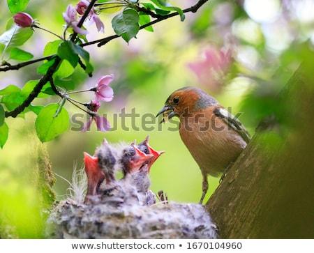 Piccolo cute uccello ramo foglie soffice Foto d'archivio © bonnie_cocos