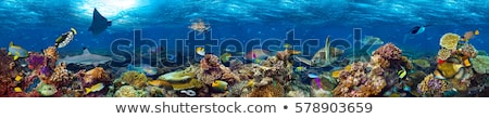 Underwater landscape background with corals and fish Stock photo © galitskaya