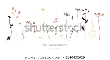 Wild Flowers Isolated Objects, Nature Elements Stock photo © robuart