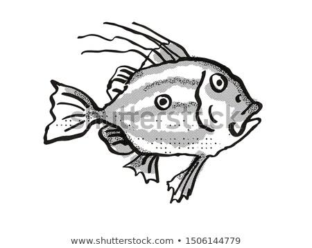 Új-Zéland hal rajz retro rajz stílus Stock fotó © patrimonio