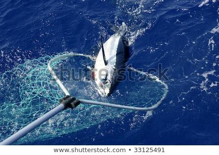 Angler fishing big game Albacore tuna on Mediterranean Stock photo © lunamarina