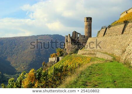 Ehrenfels castle in the vineyards of the Rhine valley Stock photo © meinzahn