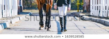 horse obstacle stock photo © sarkao