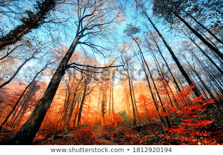 ősz tél békés hegy tájkép vibráló Stock fotó © photosebia