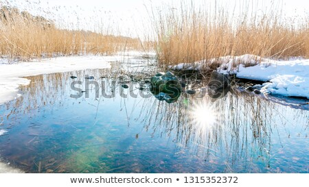 Early spring at coastline Stock photo © olandsfokus
