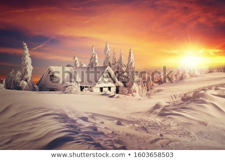 Snowy fir tree in a snowdrift Stock photo © Kotenko