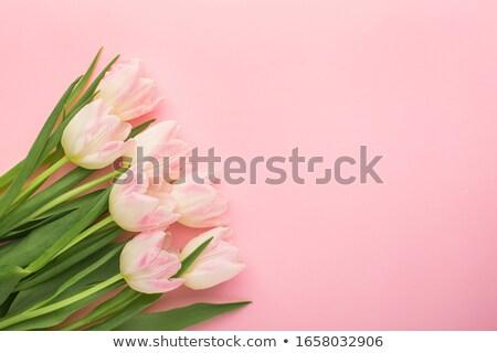 Blanco tulipanes rosa tarjeta vacaciones Foto stock © andreasberheide