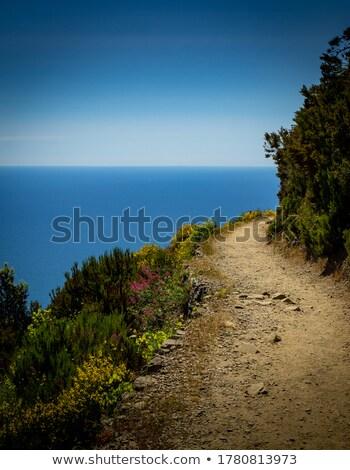 Yaz manzara yeşil tepeler deniz orman Stok fotoğraf © Kotenko