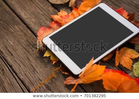 Bordo folhas mesa de madeira tabela Foto stock © wavebreak_media