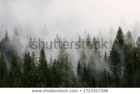 Skał zielone mgły piękna pokryty mech Zdjęcia stock © vilevi