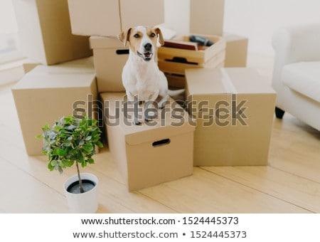 写真 ブラウン 白 テリア 犬 ストックフォト © vkstudio