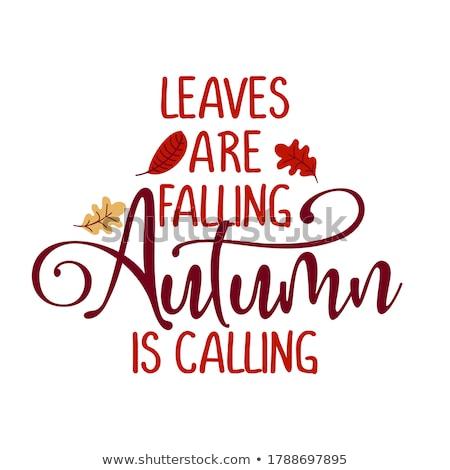 Positivo cartaz olá outono queda folhas Foto stock © barsrsind
