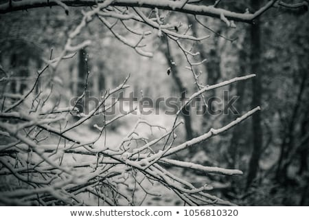 ice tree branches Stock photo © Mikko