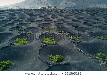 Lanzarote La Geria vineyard on black volcanic soil Stock photo © lunamarina