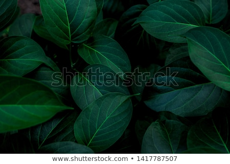 abstract green leaves background stock photo © prill