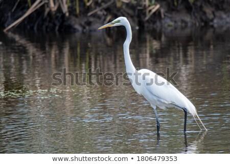 jóvenes · aves · caminando · playa · pequeño · peces - foto stock © saddako2
