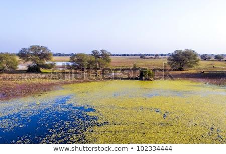 beautiful lake in the Keolado National Park, India. Stock photo © meinzahn
