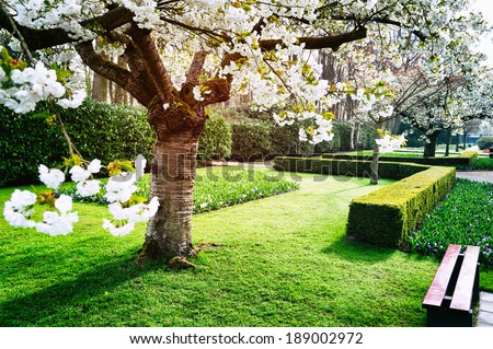 Landscaped garden in springtime Stock photo © sarahdoow