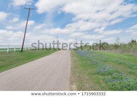власти линия Blue Sky облака белый зеленый Сток-фото © my-photomir
