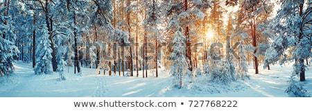 Stockfoto: Sneeuwval · bos · mooie · winter · landschap · sneeuw