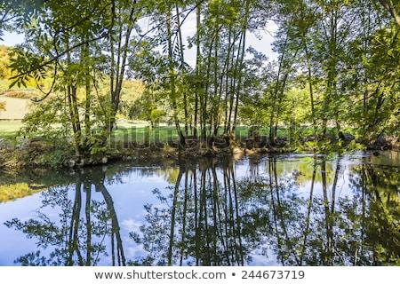 tükröződés · fák · folyó · víz · fa · természet - stock fotó © meinzahn