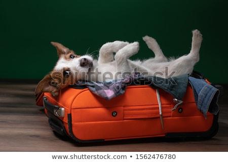 cão · carro · volante · condução · corrida · estrada - foto stock © adrenalina