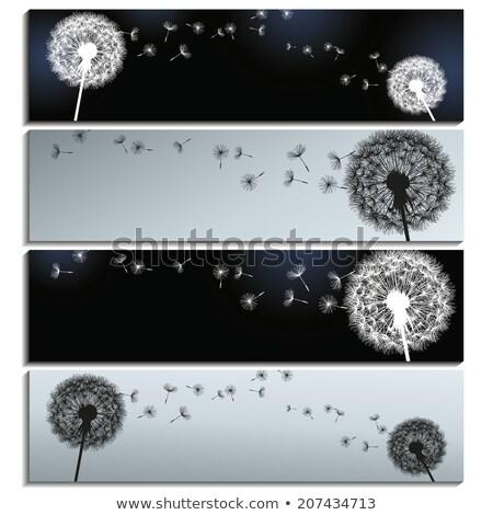 одуванчик · баннер · набор · Баннеры · небе · цветы - Сток-фото © derocz