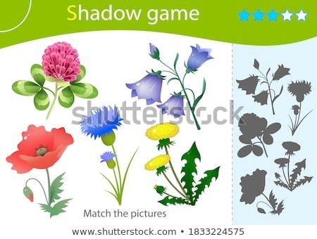 Virág árnyék összeillő játék sablon illusztráció Stock fotó © colematt