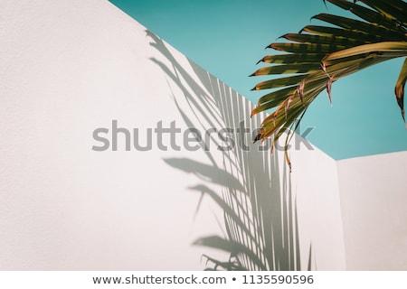palmiye · yaprağı · mavi · gökyüzü · gökyüzü · orman · doğa · arka · plan - stok fotoğraf © kotenko