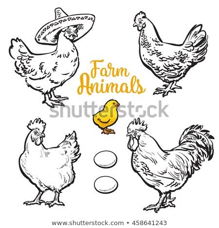 Hen Chicken on Farm Closeup Vector Illustration Stock photo © robuart