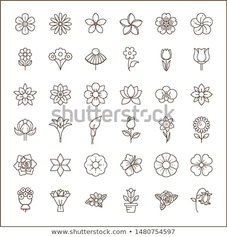 Stock photo: orchid icon set