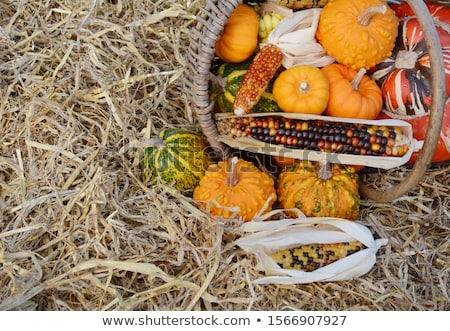 Woven basket of Thanksgiving gourds and squash with flint corn Stock photo © sarahdoow