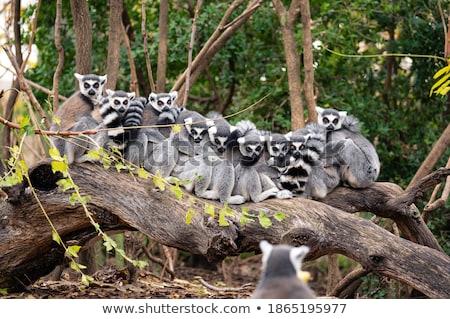 Grup animale salbatice ilustrare pisică proiect artă Imagine de stoc © bluering